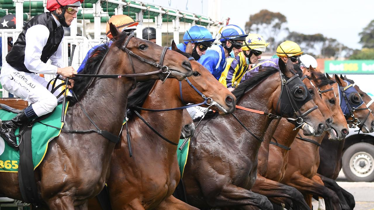 Off To War is one of the leading hopes for Neil Osborne at Queanbeyan.
