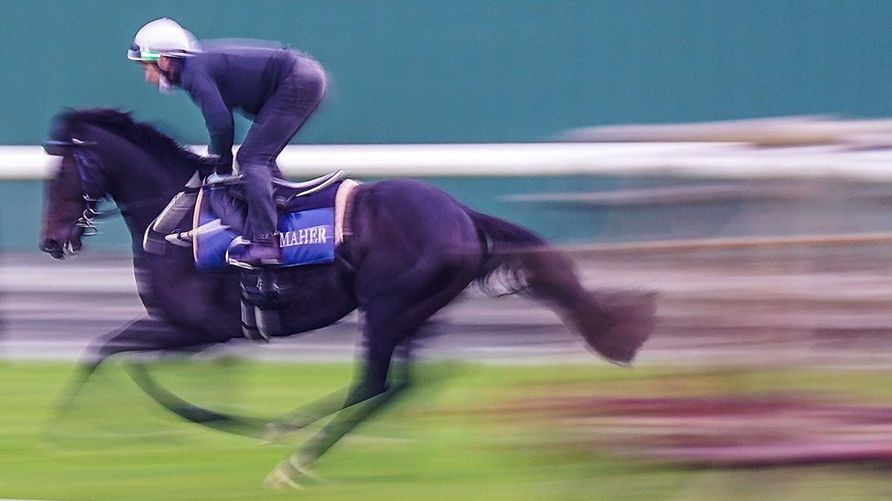 Will Sir Dragonet be a blur in Tuesday's Melbourne Cup? Scott Barbour/Racing Photos via Getty Images