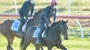 Stratum Albion (No. 15) works alongside his William Mullins stablemate True Self at Werribee. Photo: Racing Photos via Getty Images