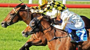 Newcastle's Beaumont track is the venue for NSW's Monday meeting.