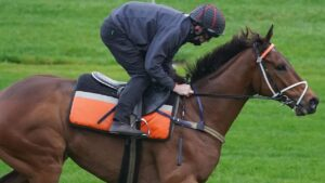 Mugatoo is one of the value runners in the Cox Plate