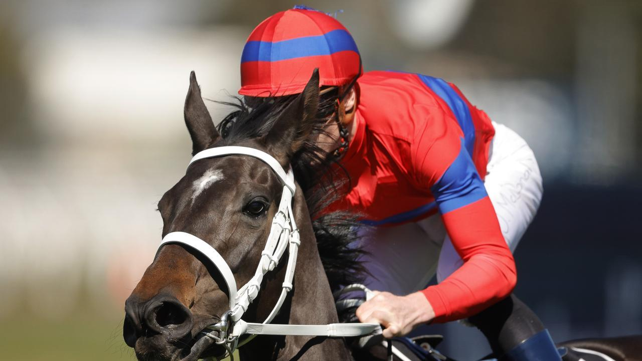 Verry Elleegant won the 2020 Caulfield Cup. (Photo by Mark Evans/Getty Images)
