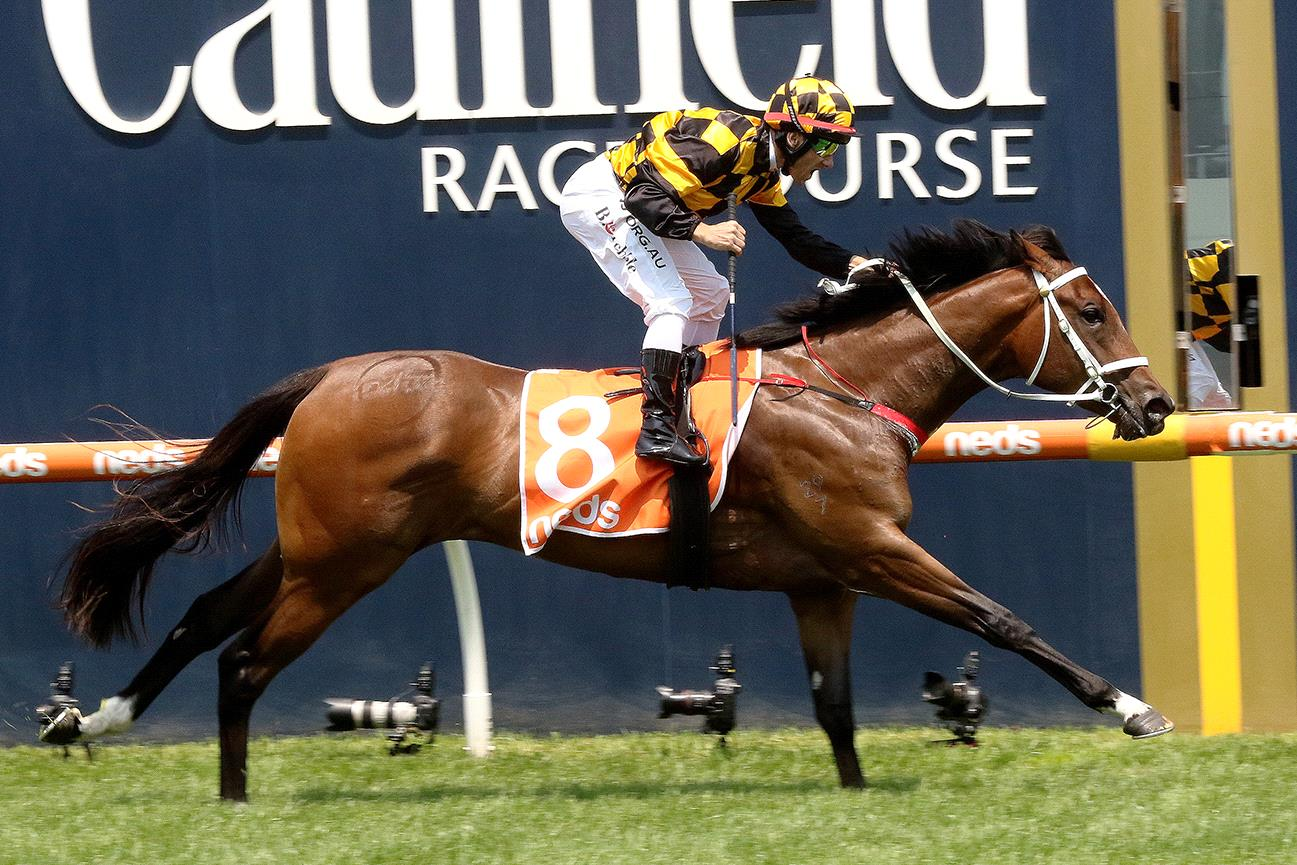 Letzbeglam will chase another victory in Saturday's Blue Diamond Stakes.