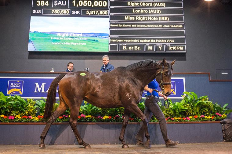 Sunlight was sold for $4.2 million at the Magic Millions National Sale on Monday.