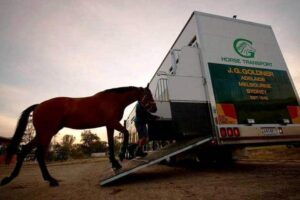 Horse transport is the latest point of difference between Racing Victoria and Racing NSW.