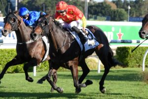 Heading north to have a punt at Grafton and this Snowden galloper is my selection in the feature race.