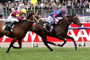 Prince Of Arran runs in the Ascot Gold Cup.