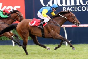 Black Heart Bart might be having his last start at the Belmont Racecourse on Saturday.
