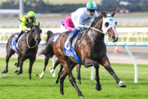 Master Montaro will debut for the Lindsay Park stable in the coming days.