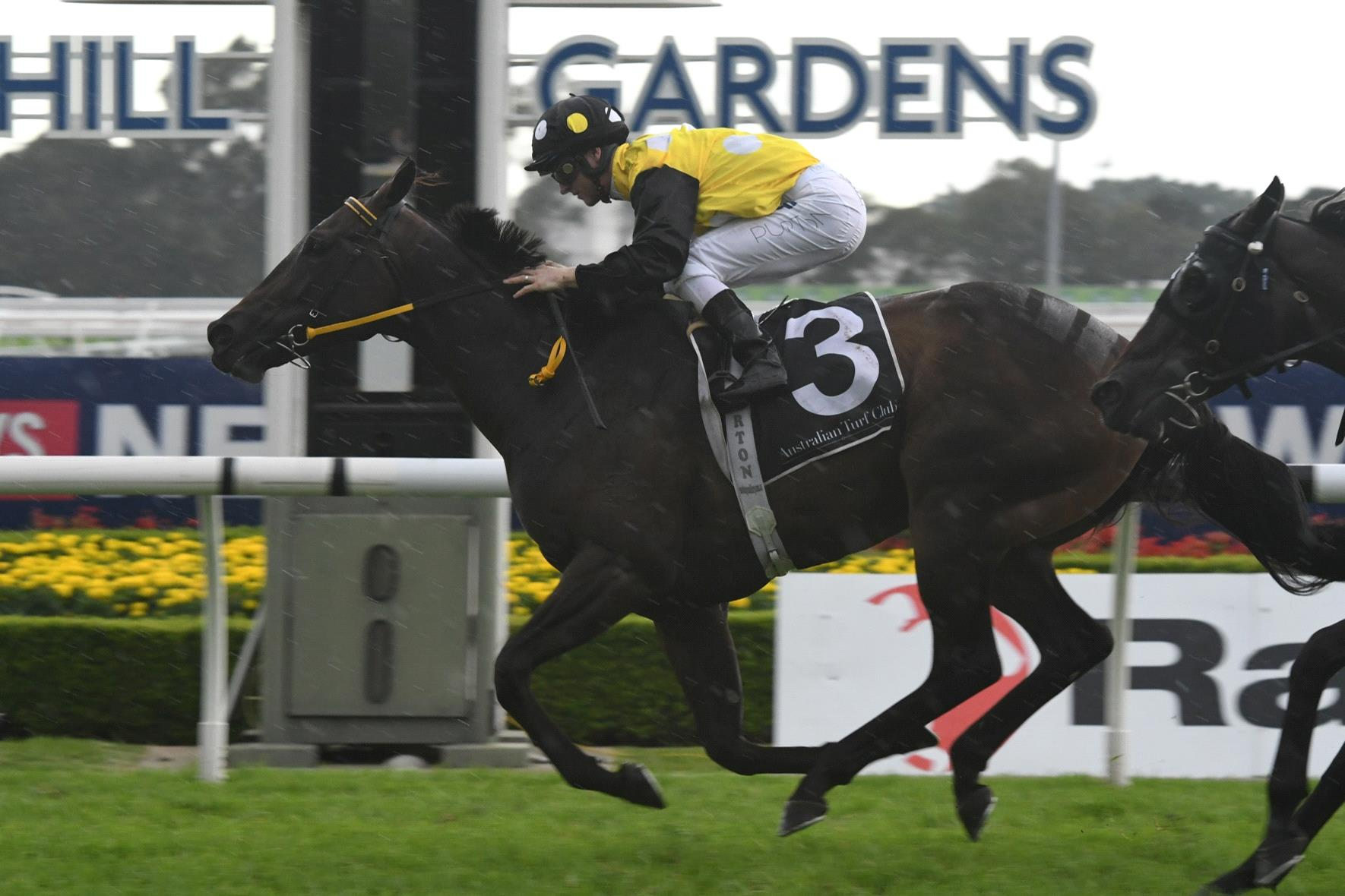 In Her Time will be sold at the Chairman's Sale.