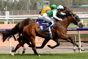 The Inevitable will be back at Flemington on Saturday week.