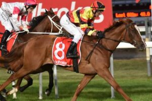 Brendon McCoull and Still A Star are favoured to win the 2020 Tasmanian Derby.