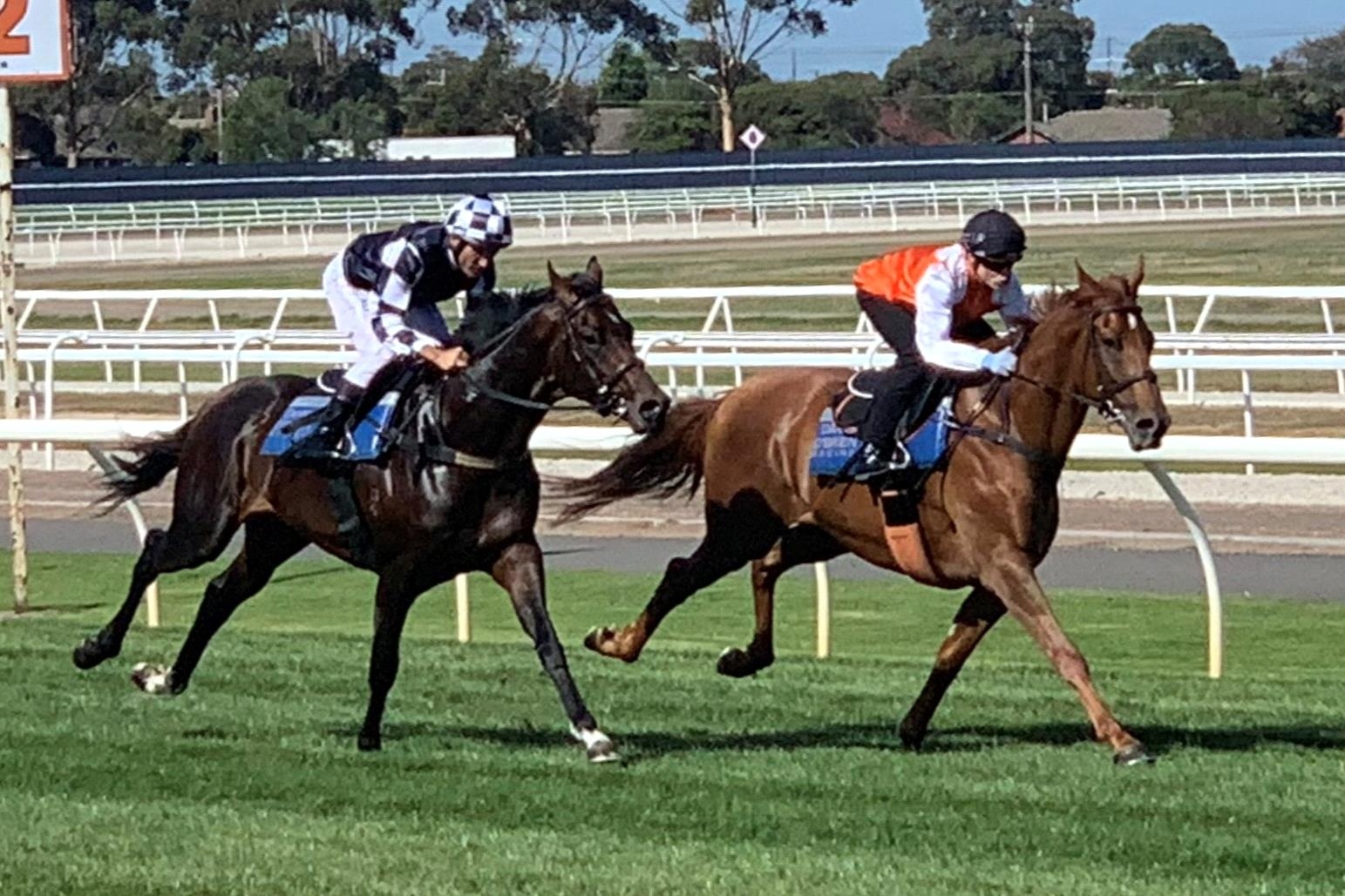 Vow And Declare (orange silks) leads his stablemate Russian Camelot in a gallop at Geelong.