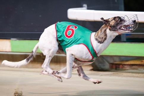 SA Derby favourite Curt Lee.
