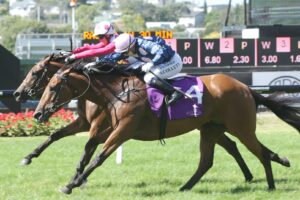 Glory Days will be in action at Flemington on Saturday.