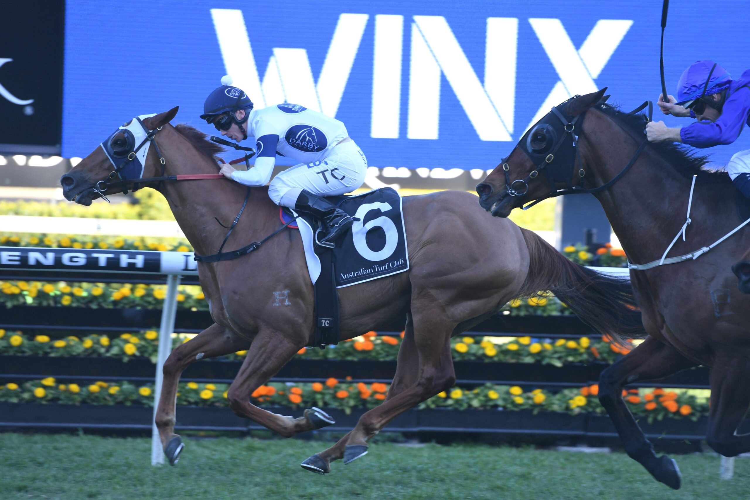 Samadoubt will be looking to repeat his Winx Stakes heroics.