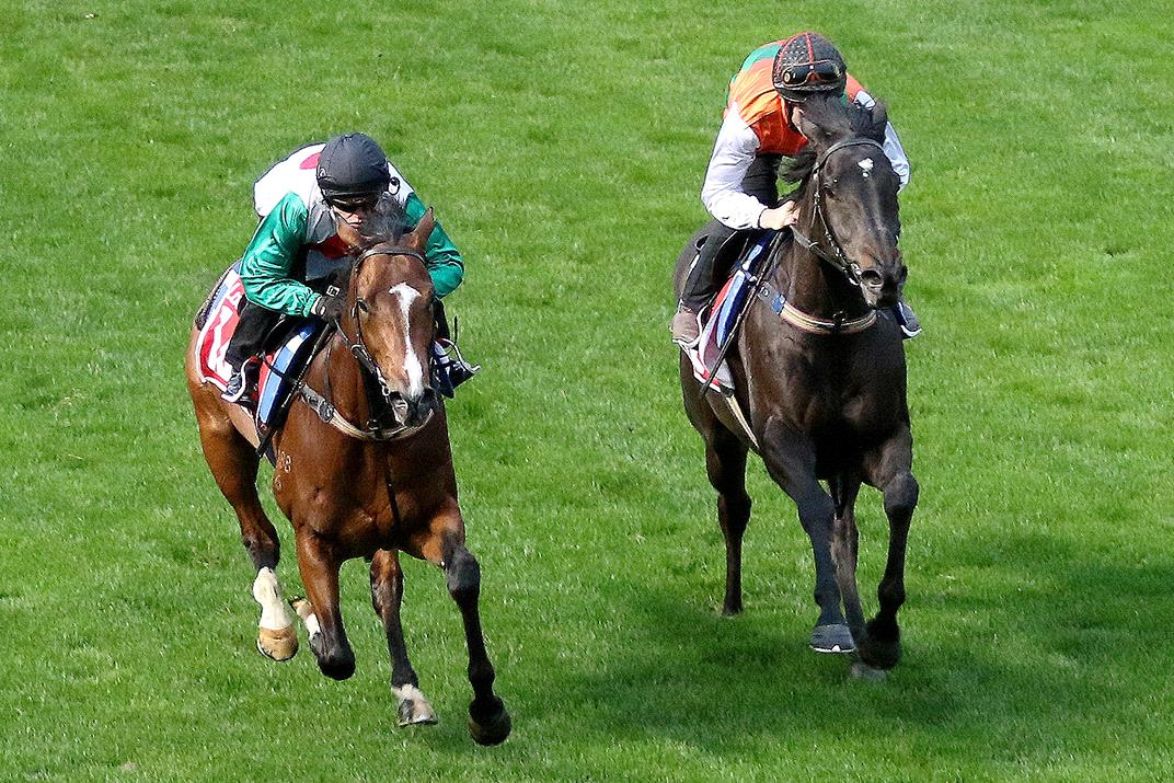 Castelvecchio (left) and stablemate Morton's Fork work together on Tuesday.