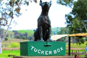 They are racing where the dog sits on the tucker box on Sunday