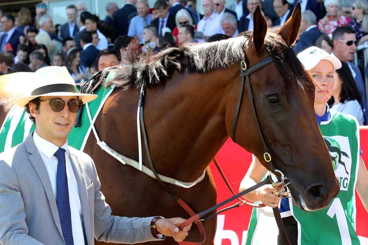 All-Star Mile favourite Alizee parades before galloping between races at Flemington on Newmarket Handicap day.