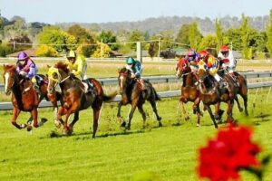 The locals looks set fight out Sunday's Armidale Cup