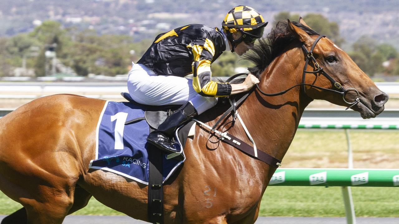 Dual Group 1 winner Behemoth is having his third attempt at winning The Goodwood. Picture: Atkins Photography