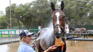 Nettoyer enjoying a slice of Margherita pizza with trainer Wendy Roche. Picture: Toby Zerna
