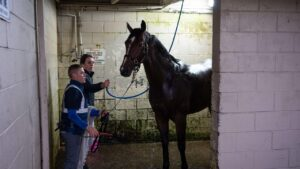 Annabel Neasham and strapper Raphael Marchelli wash down Zaaki after trackwork. Picture: Brad Fleet