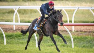 Tiger Moth at trackwork during his time at Werribee in last year's Spring Racing Carnival. Photo: Reg Ryan/Racing Photos via Getty Images.