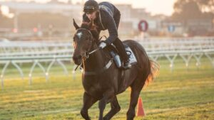 Odeum has a gallop at Eagle Farm on Tuesday morning. Picture: Brad Fleet