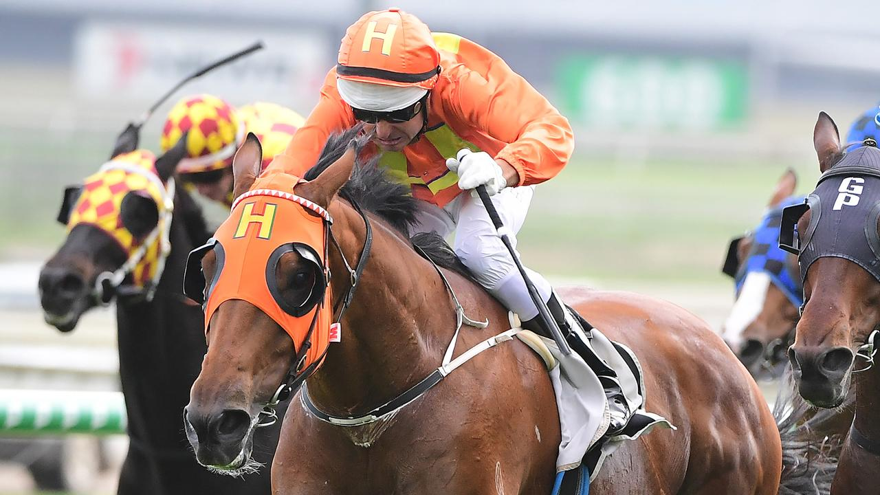 The Harrovian has been strongly backed to win the Stradbroke Handicap. Picture: Trackside Photography
