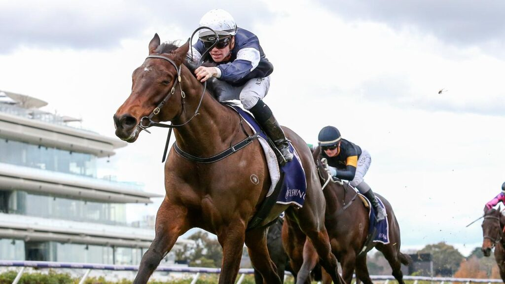 Flemington winner Degraves wasn't an easy steer for Will Price in The David Bourke. Picture: Racing Photos via Getty Images