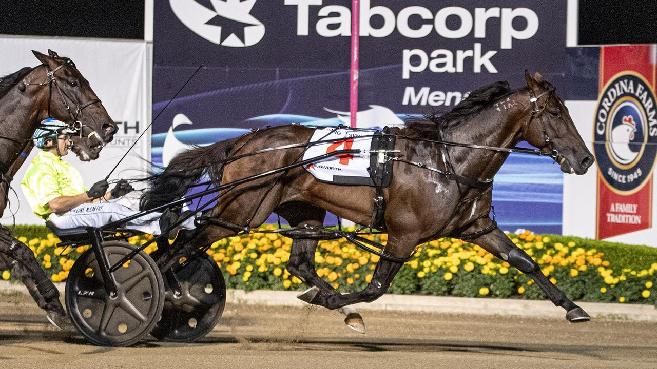 King Of Swing has drawn gate 11 for the Sunshine Sprint at Albion Park. Picture: Ashlea Brennan Photography