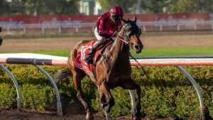 Trident is one of the fancied elects in the $135,000 Ladbrokes NT Derby. Picture: Supplied