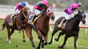 Bletchingly Stakes hopeful Inn Keeper should relish the wet ground at Caulfield on Saturday. Picture: Michael Klein