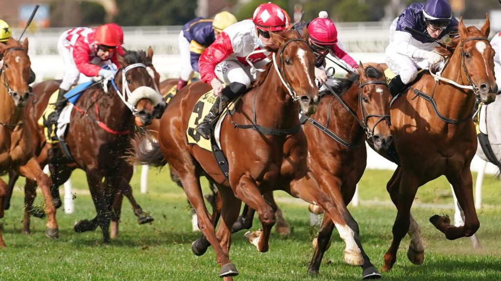 River Views swamped his rivals from back in the field to win the VOBIS Gold Ingot at Caulfield. Picture: Racing Photos via Getty Images.