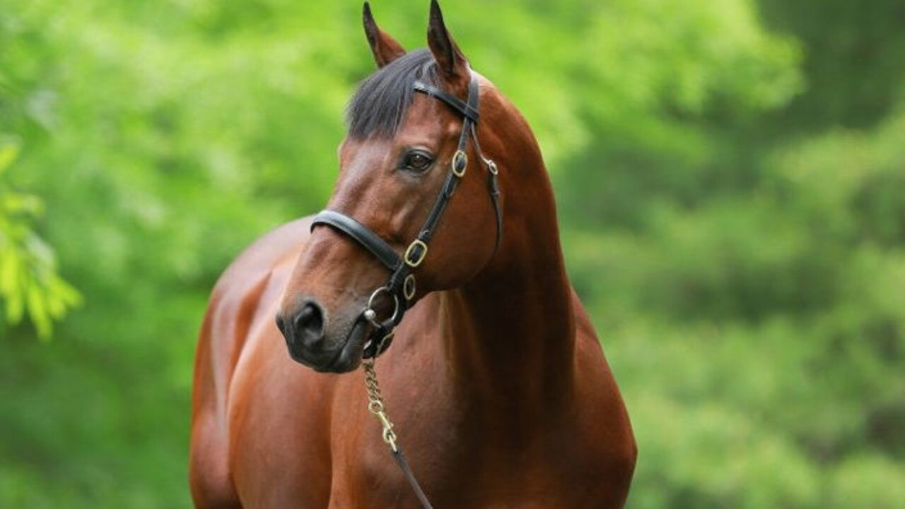 American Pharoah is the sire of Have Mercy, who will debut at Kensington on Wednesday. Picture: Coolmore