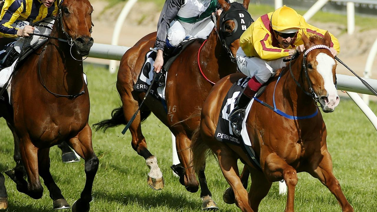 The million dollar daughter of Miracles of Life (pictured) won at Randwick. Picture: Colleen Petch.