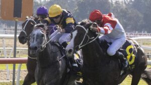 Luncies (grey) wins at Hawkesbury back in May. Photo: Jenny Evans/Getty Images.