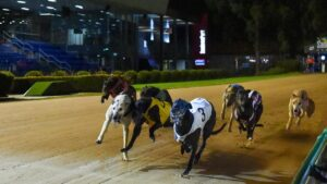 Greyhound racing has had a surge in turnover. Photo: Clint Anderson.