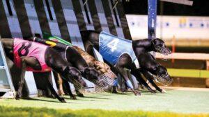 Pic: Greyhound Racing SA
