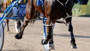 HRV stewards are investigating after a driver allegedly placed bets on his drives.