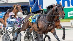 Out To Play returns at Bendigo on Saturday night on his way to the Victoria Cup in October. Picture: Stuart McCormick