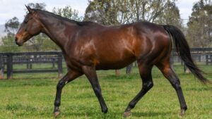Champion racehorse Winx turns 10 on Tuesday. She will be covered by top sire Pierro this spring.