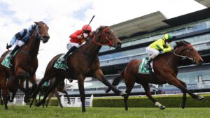 Sunrise Ruby will run in the Kosciuszko. Photo: Mark Evans/Getty Images