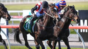 Lightly-raced mare Rinnova can post another win at Bendigo on Wednesday. Picture: Racing Photos via Getty Images