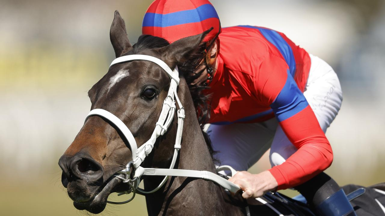 THE QUEEN: Verry Elleegant will be chasing another Group 1 win at Randwick on Saturday. Photo: Mark Evans/Getty Images.