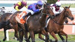 The owners of Ayrton have rejected a $2m offer after his last run at Flemington. Picture: Racing Photos via Getty Images