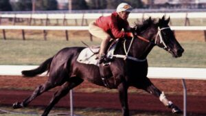Hall of Famer Kingston Town became the first racehorse in Australia to earn $1 million in prizemoney in September 1981.