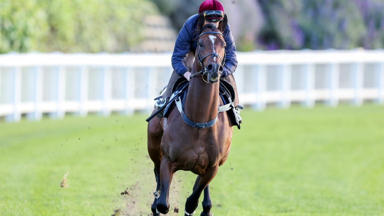Wild Ruler prepared for the Group 1 Moir Stakes with a gallop at The Valley with jockey Daniel Moor in the saddle on Monday. Picture: Racing Photos via Getty Images.