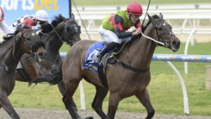 Johnny Buccaneer can post another win when he has his second-up run at Tuesday's Kyneton meeting. Picture : Racing Photos via Getty Images.